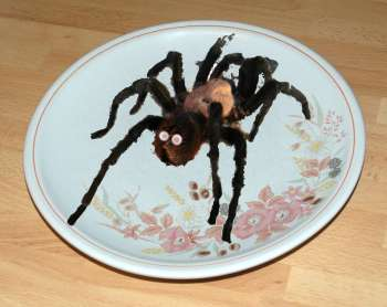 Bird eating tarantula on a dinner plate : dinner plate spiders - pezcame.com